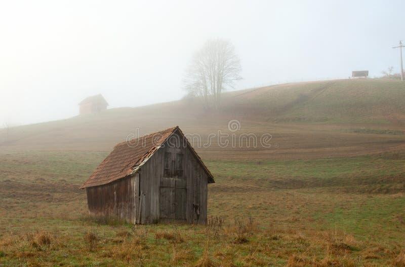 Mañana de niebla en el bosque negro imagen de archivo libre de regalías