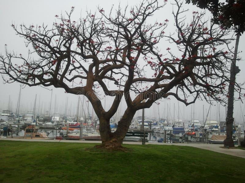 Mañana de niebla en Santa Barbara foto de archivo libre de regalías