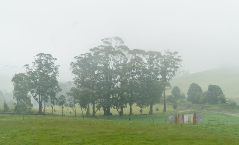 Mañana de niebla, Tasmania, Australia imagen de archivo