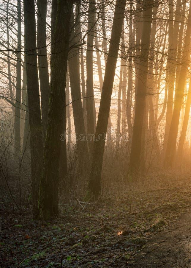 Mañana de niebla y arbolado brumoso en Gothenburg Suecia imagen de archivo libre de regalías
