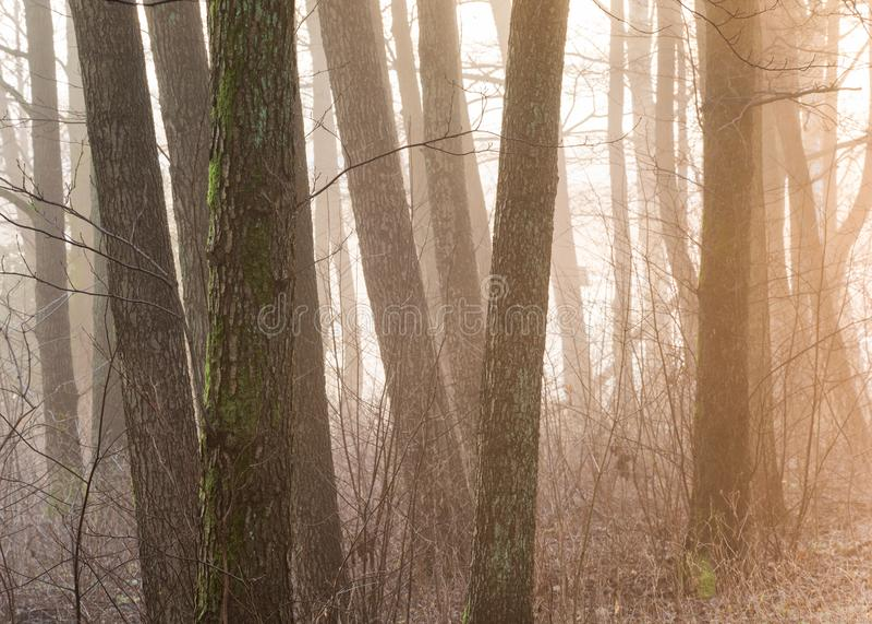 Mañana de niebla y arbolado brumoso en Gothenburg Suecia fotos de archivo libres de regalías