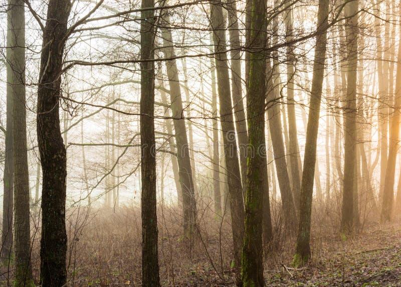 Mañana de niebla y arbolado brumoso en Gothenburg Suecia foto de archivo libre de regalías