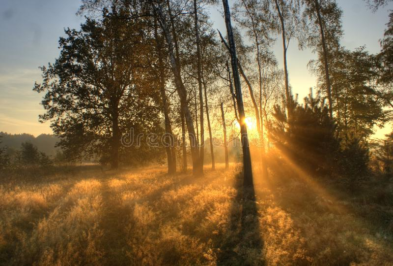 Mañana del otoño imágenes de archivo libres de regalías