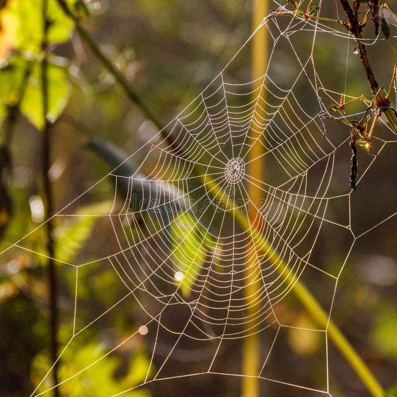 Mañana del otoño y el web del ` s de la araña en las plantas imagenes de archivo