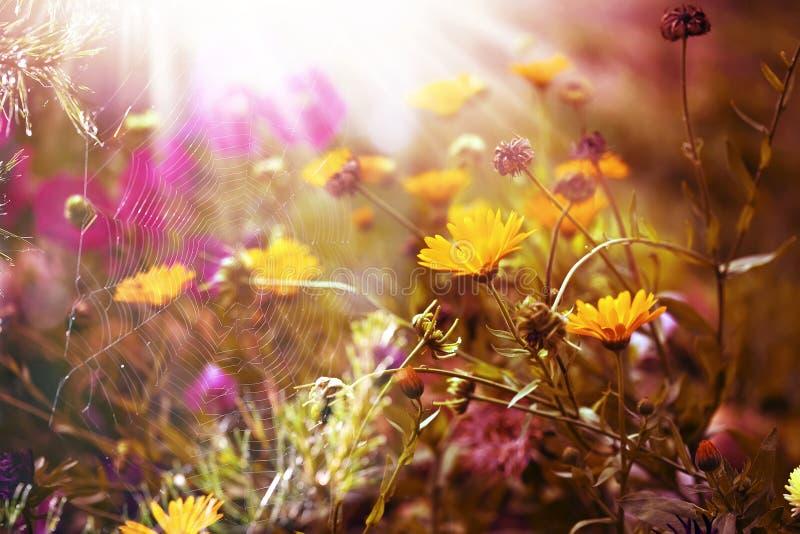 Mañana del otoño y el web del ` s de la araña en las plantas fotografía de archivo