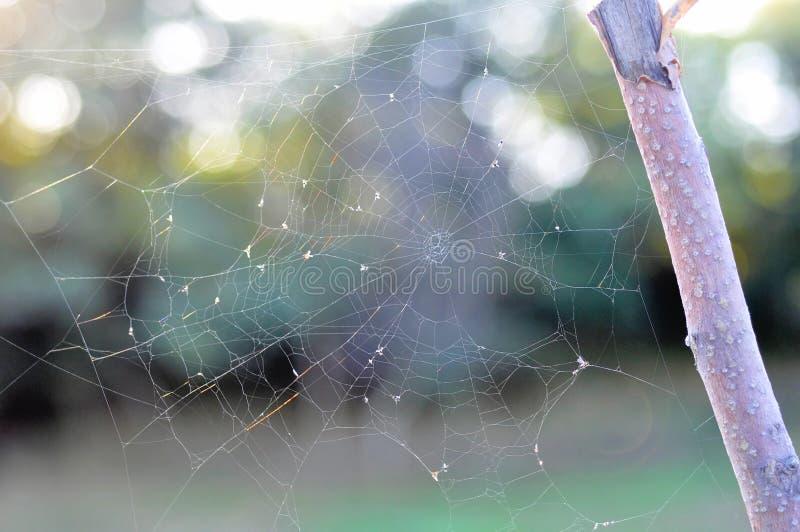 Mañana del otoño y el web del ` s de la araña en las plantas Profundidad baja fotos de archivo