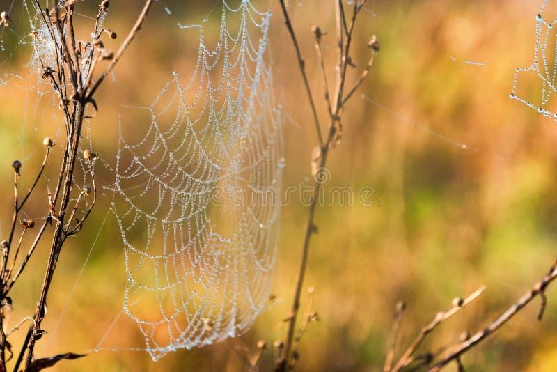 Mañana del otoño y web del ` s de la araña con rocío imagen de archivo libre de regalías