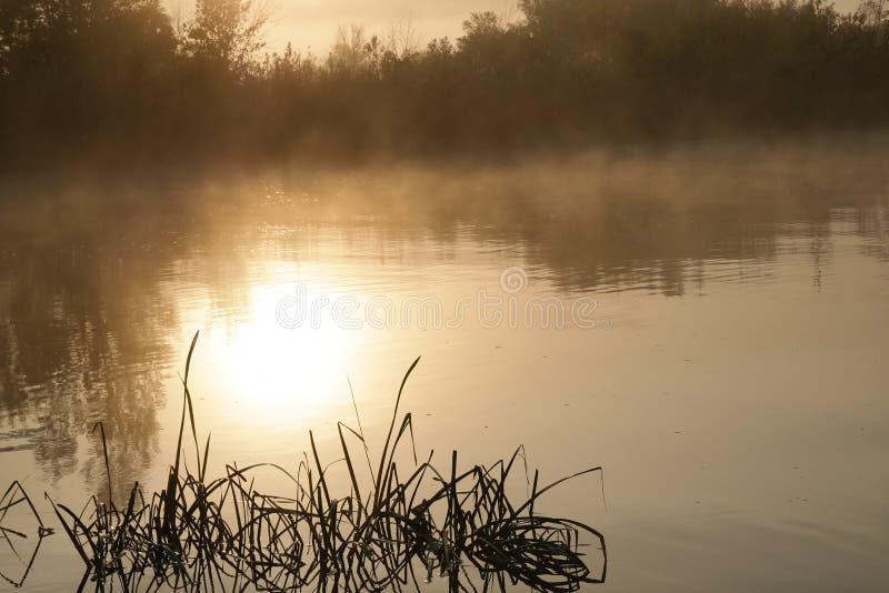 Mañana del verano en el río imagenes de archivo