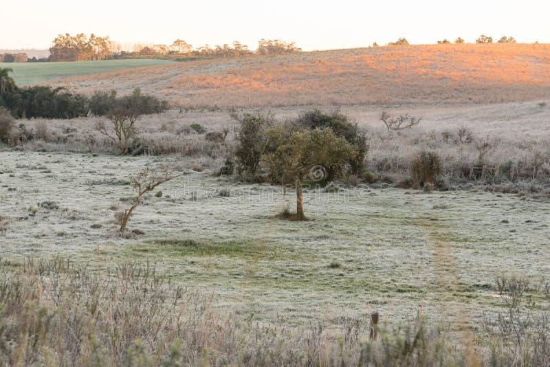 Mañana e hielo del invierno en los campos imagen de archivo libre de regalías