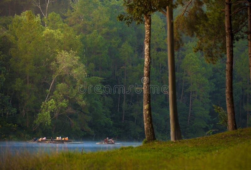 Mañana en bosque con acampar en la niebla Pangung Mae Hong Son imagenes de archivo