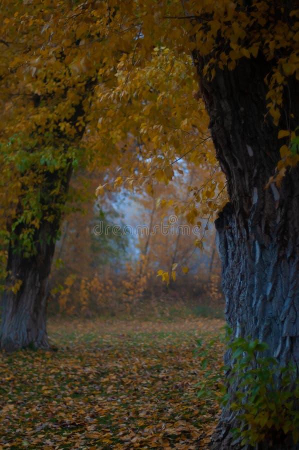 Mañana en el bosque de Taos, nanómetro de Misty Autumn foto de archivo libre de regalías