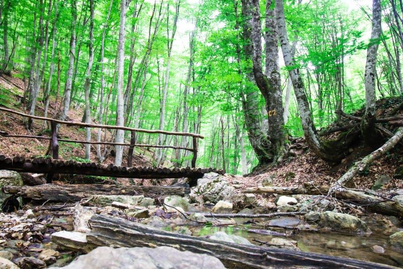 Mañana en el bosque, parque hermoso, paisaje del verano, bosque fotos de archivo libres de regalías