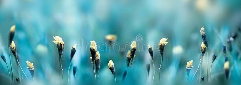 Mañana en el campo de la primavera imagen de archivo
