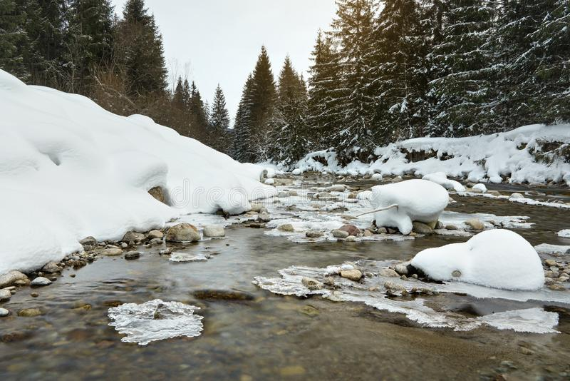 Mañana en el río congelado en invierno, foto del ángulo bajo, foco en cala y piedras nevadas, con los árboles coníferos y imagenes de archivo