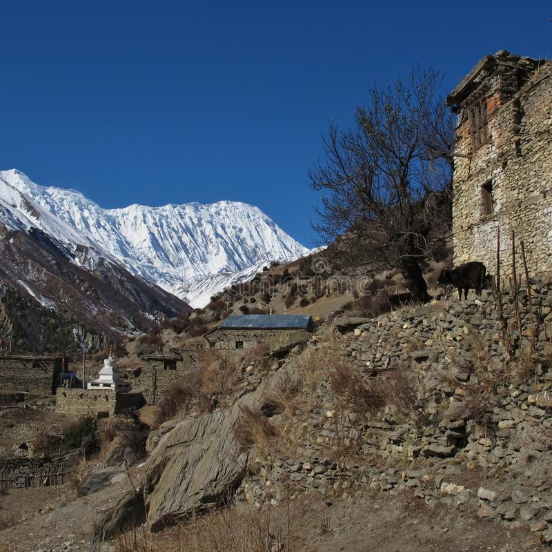 Mañana en Khangsar fotografía de archivo