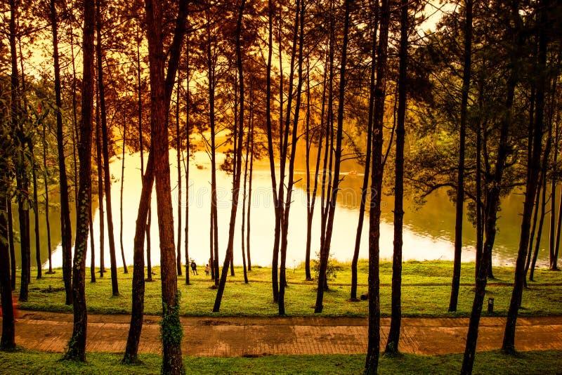 Mañana en la escena de la naturaleza de Forest Park del pino de Pang Ung fotos de archivo