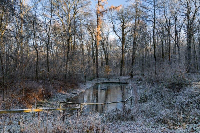 Mañana en parque del invierno foto de archivo libre de regalías