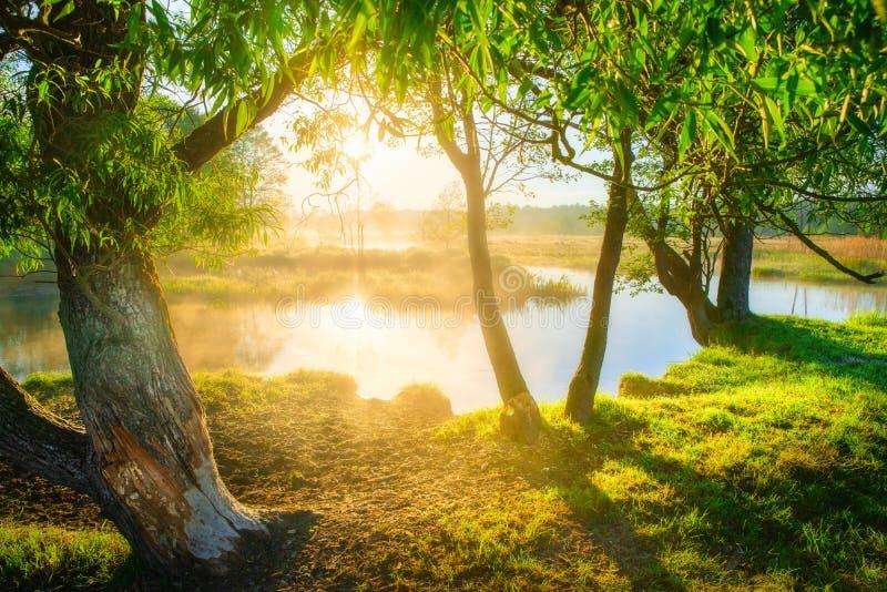 Mañana escénica del verano Fondo de la naturaleza del verano Sol brillante en las hojas verdes fotos de archivo