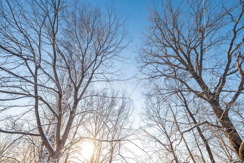 Mañana escarchada del amanecer Paisaje del invierno de árboles escarchados, de la nieve blanca y del cielo azul Naturaleza tranqu fotos de archivo
