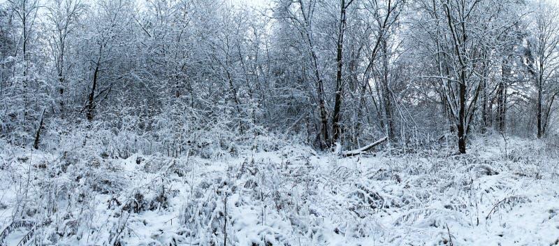 Mañana escarchada del bosque hermoso del invierno foto de archivo libre de regalías