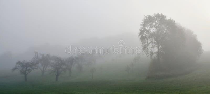 Mañana fría y de niebla foto de archivo libre de regalías