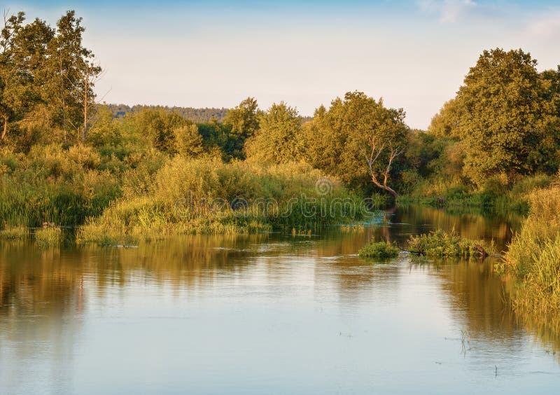 Mañana hermosa en el río en el bosque fotos de archivo libres de regalías