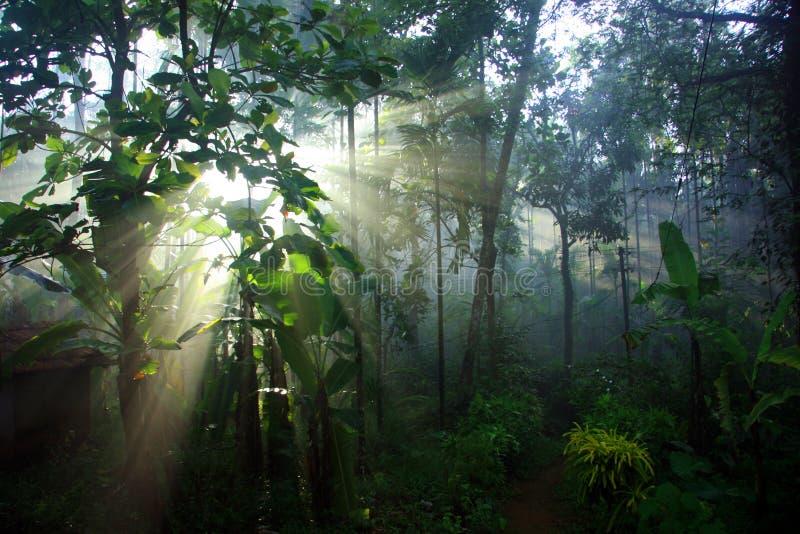 Mañana light-03 fotografía de archivo