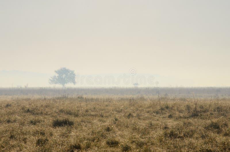 Mañana nebulosa en el parque nacional de Hortobagy, Hungría fotos de archivo
