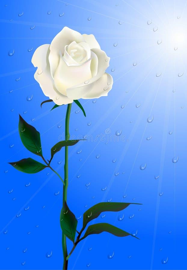 Mañana Rose. ilustración del vector