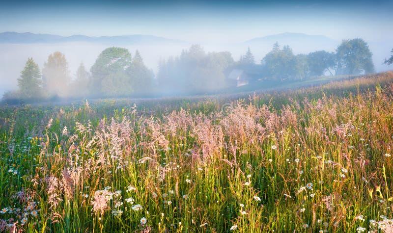 Mañana soleada del verano en el pueblo de montaña de niebla fotografía de archivo