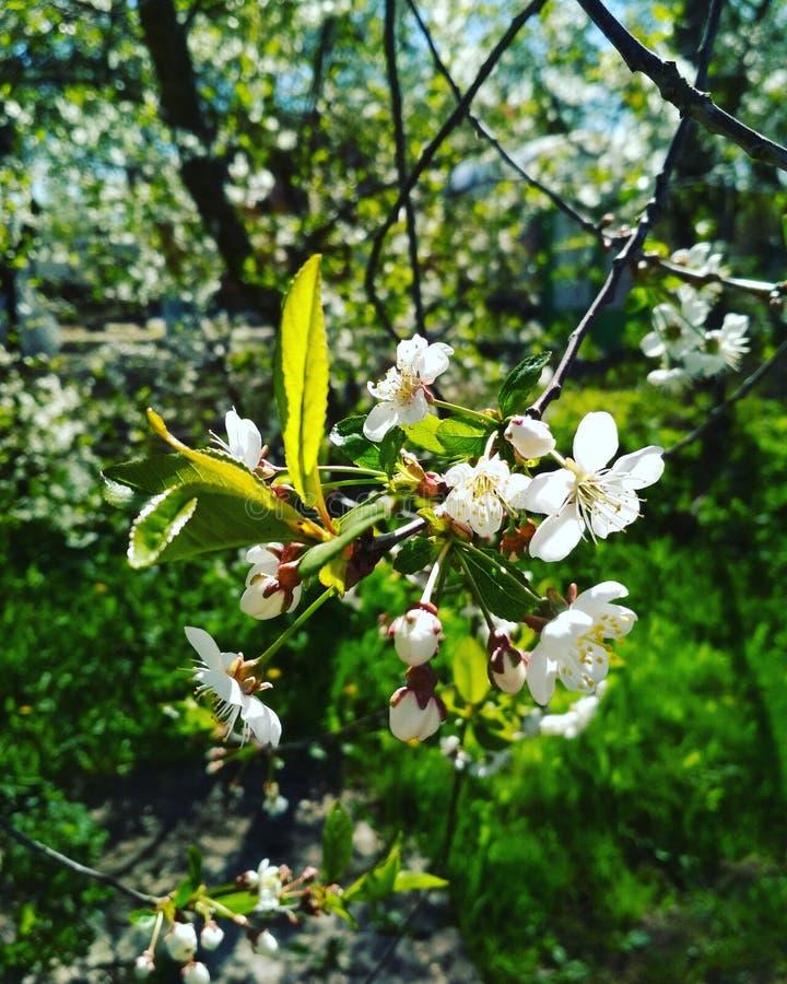 Mañana y flovers soleados hermosos de la primavera foto de archivo