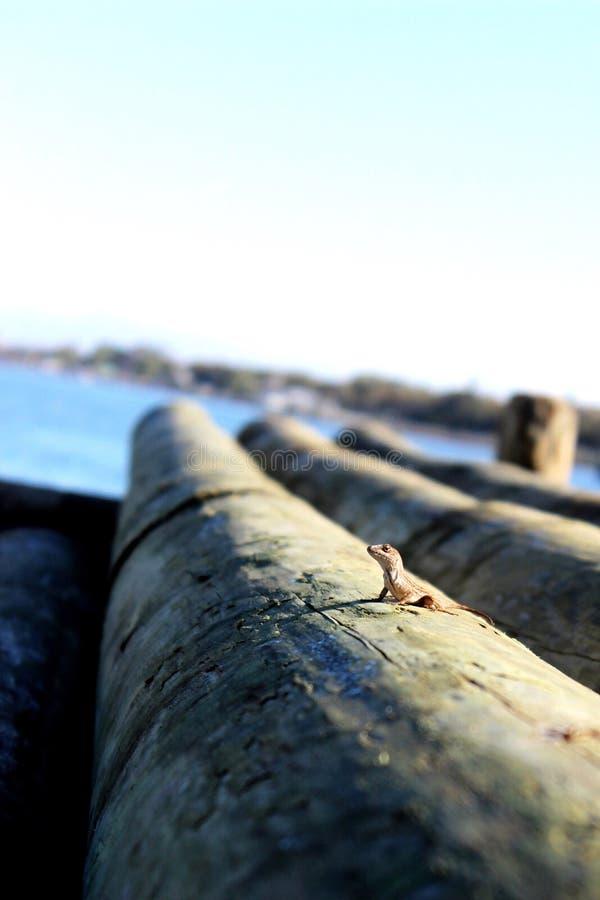 Mañanas del puerto deportivo imagen de archivo