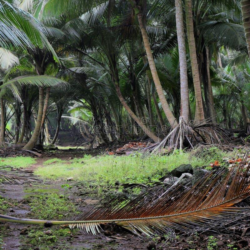 Mała ścieżka w tropikalnym lesie sao principe i wolumin zdjęcie royalty free