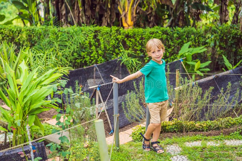 Mała śliczna chłopiec w organicznie życiorys jarzynowym ogródzie fotografia royalty free