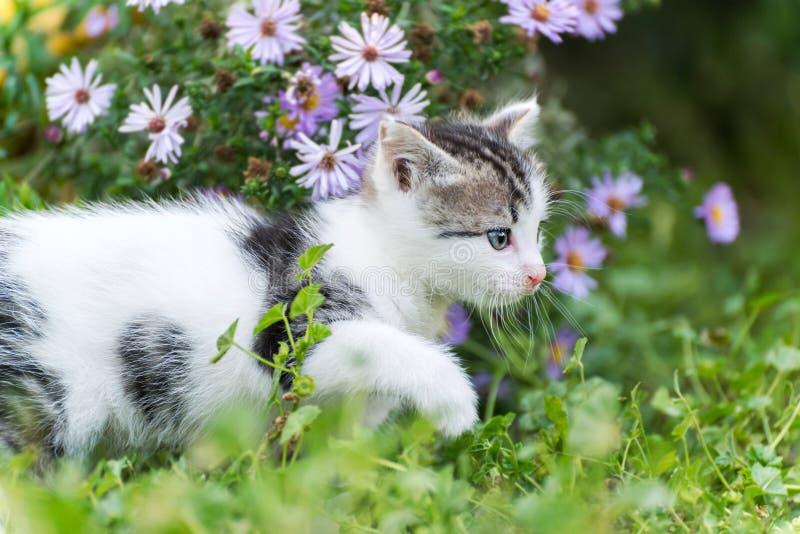 Mała śmieszna figlarka w różowych kwiatach fotografia stock