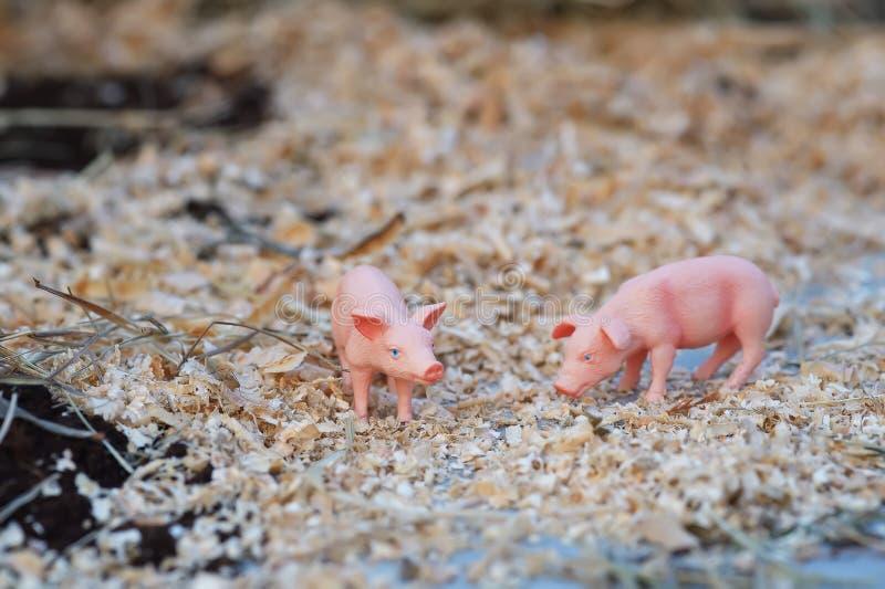 mała świnia zdjęcia royalty free