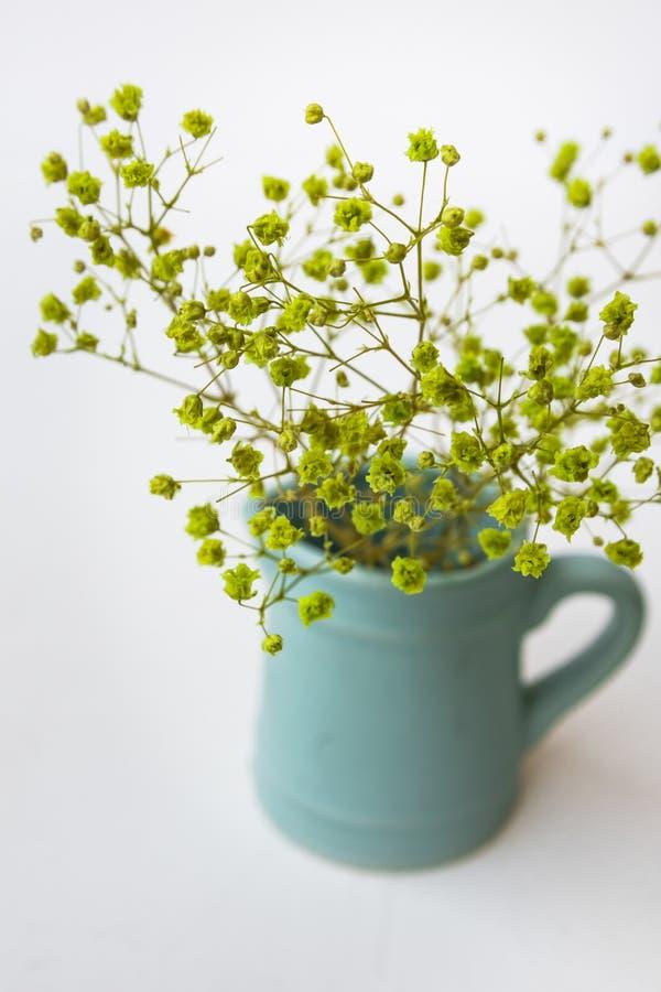 Mała żółta zieleń kwitnie w błękitnym miotaczu lub dzbanek na białym tle, odgórny widok, pastelowi kolory, minimalistyczni czyści zdjęcia stock