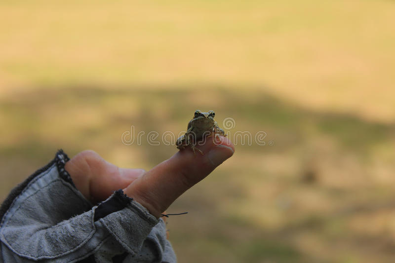 Mała żaba obraz royalty free