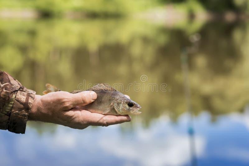 Mała żerdź z drzeję z haczyka na linii w palma rybaku Pojęcie pomyślność, finanse, inwestycja, sukces, aktywnego odpoczynek obraz stock