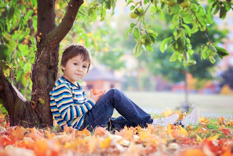 Mała berbeć chłopiec, je jabłka w popołudniu obraz royalty free