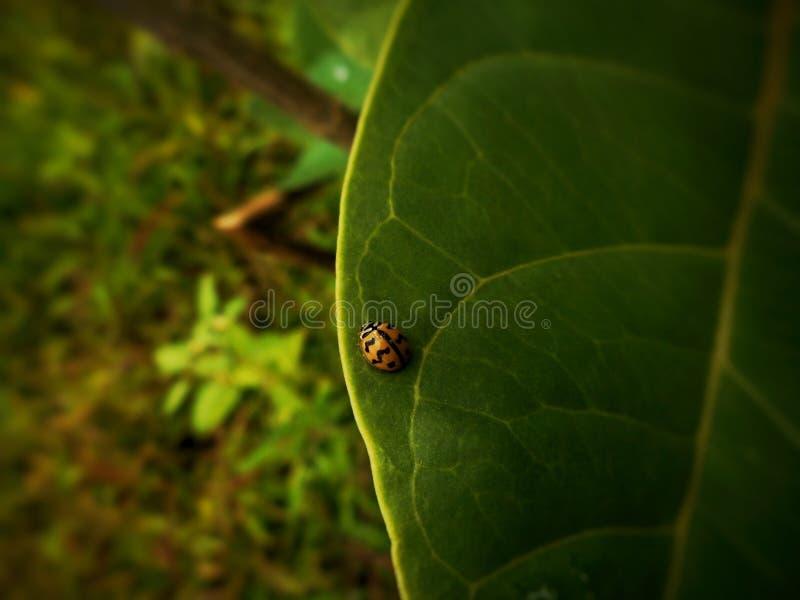 Mała biedronka w ogrodzie zdjęcia stock
