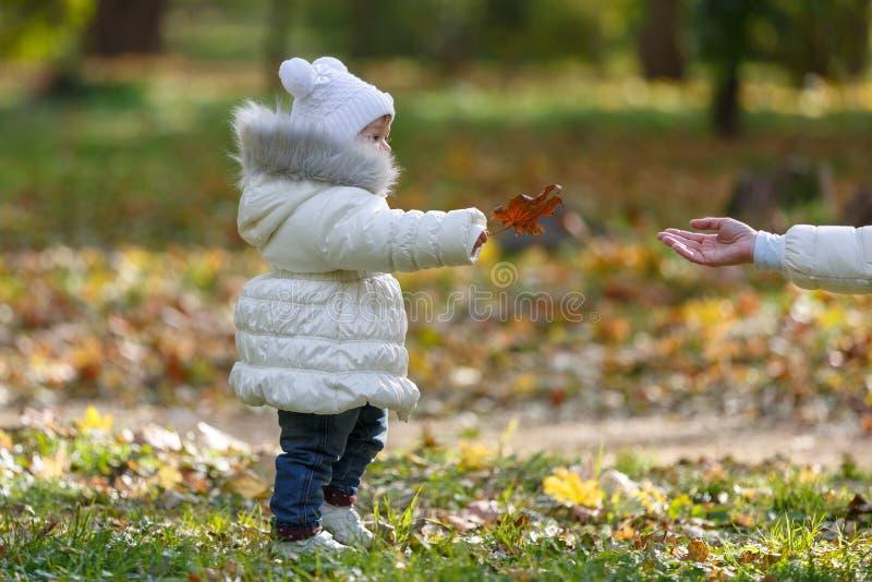 Mała córka w białej kurtce daje jej matce pomarańczowemu jesień liściowi klonowemu w parku zdjęcia stock