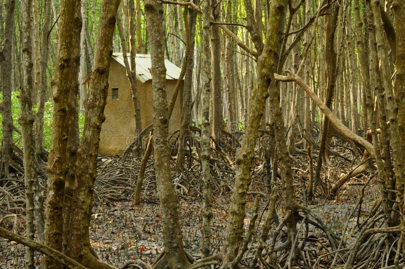 Mała chałupa w namorzynowym lesie fotografia royalty free
