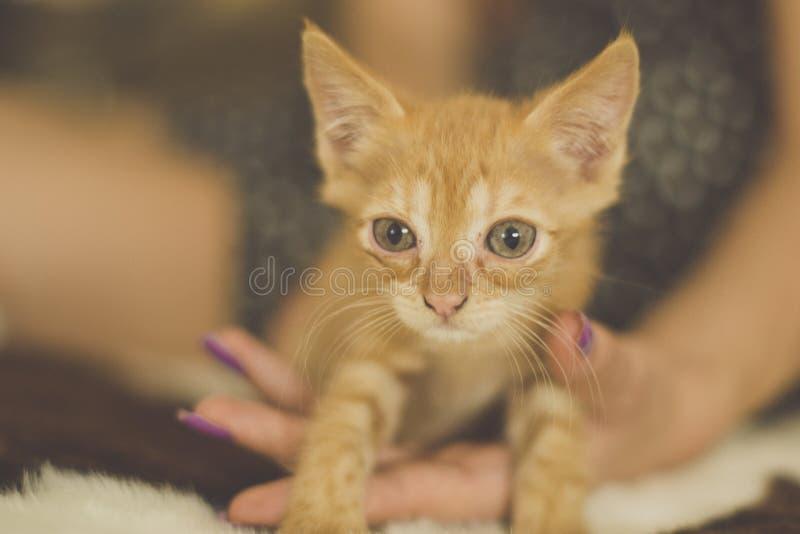 mała czerwona słodką kociaki fotografia stock