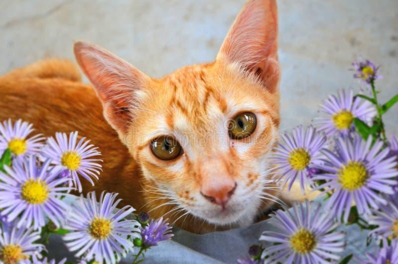 Mała dosyć brown kiciunia z stokrotka kwiatami zdjęcia royalty free