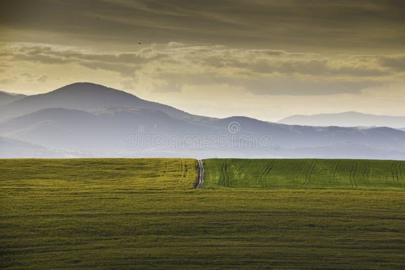 Mała droga między dwa polami obraz stock