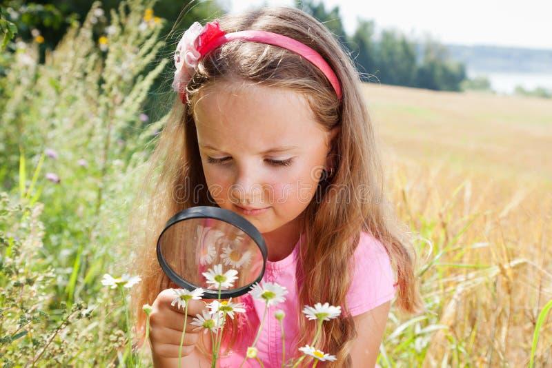 Mała dziewczynka bada stokrotki przez powiększać - szkło zdjęcie stock