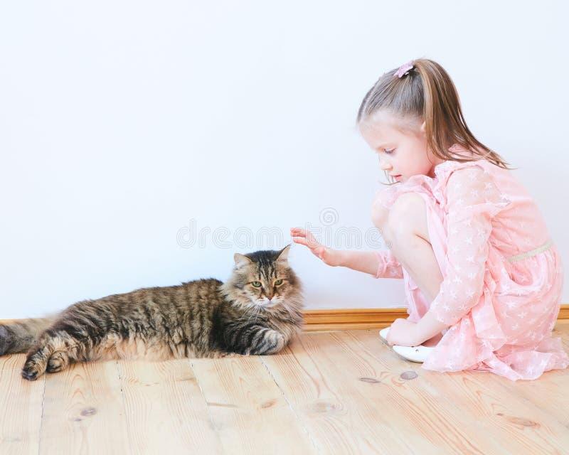 Mała dziewczynka bawić się z kotem w domu zdjęcie stock