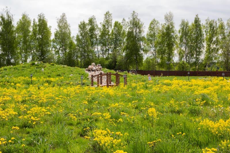mała dziewczynka chodzi w parku przerastającym z dandelions fotografia stock
