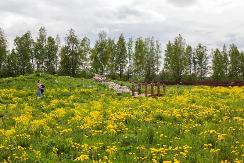 Mała dziewczynka chodzi w parku przerastającym z dandelions z matką fotografia royalty free